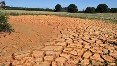 """صورة الجفاف يكبد أوروبا خسائر """"زراعية"""" كبيرة"""