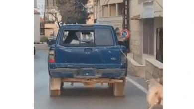 صورة فيديو تعذيب كلب يثير الجدل في لبنان.. ما الحقيقة وراء القصة؟