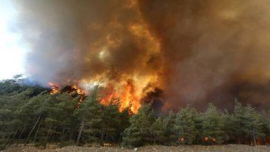 """صورة تركيا.. جماعة """"أبناء النار"""" الكردية تعلن مسؤوليتها عن حرائق الغابات في البلاد"""