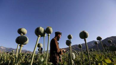 صورة طاجيكستان تعلن عن زيادة تهريب المخدرات والأسلحة من أفغانستان